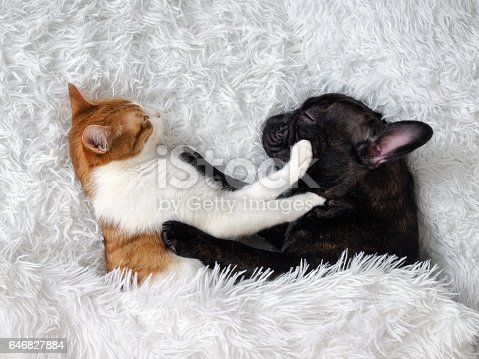 istock cat and dog. Cute animals are on the bed. Warm white fluffy blanket 646827884