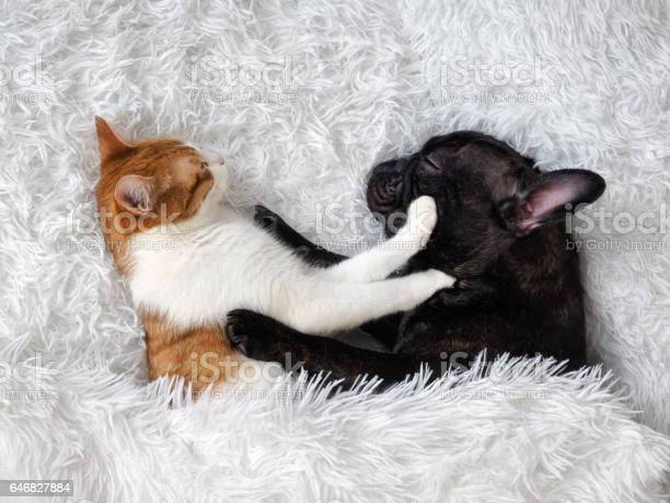 Cat and dog cute animals are on the bed warm white fluffy blanket picture id646827884?b=1&k=6&m=646827884&s=612x612&h=o29kscup qkqzgxs0aknfltb1cuym 0xcrmqjlbkf6s=