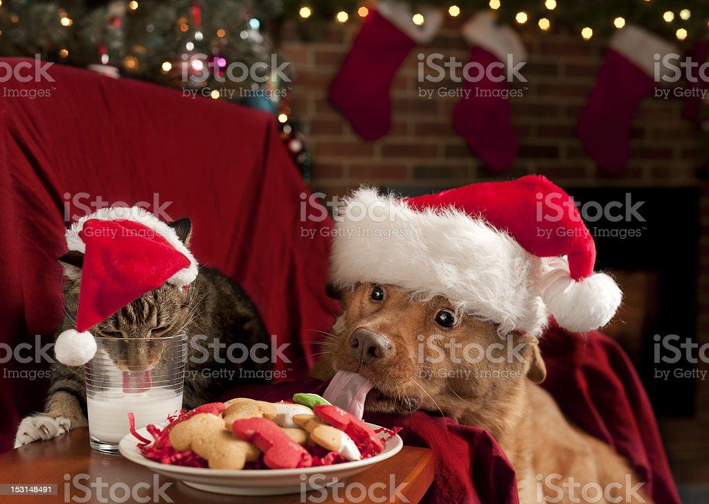 Cat and Dog eating Santa's snack royalty-free stock photo