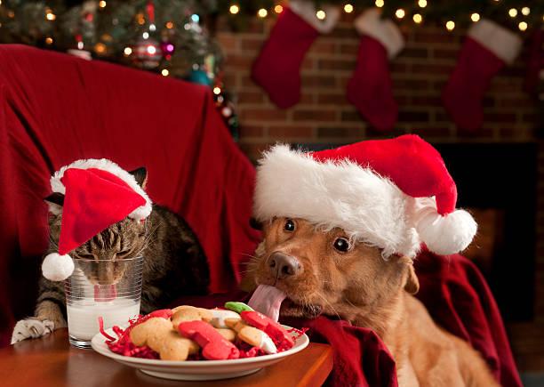 katze und hund essen santa's snack - katze weihnachten stock-fotos und bilder