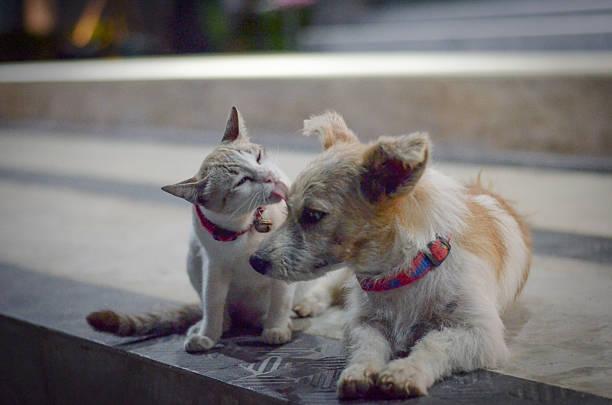 Cat and dog family picture id637395158?b=1&k=6&m=637395158&s=612x612&w=0&h=hvhl2bfw5lr8swyuyd95cjz0to ubttl 0shg9l8m6u=