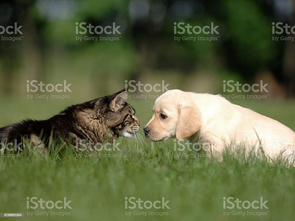 cat and dog friendship stock photo
