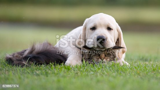 istock cat and dog friendship 628867374