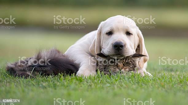 Cat and dog friendship picture id628867374?b=1&k=6&m=628867374&s=612x612&h=wxwhmcjwzs9sxyubyevh4eixzdfxcg9y2ir2fig9mx4=