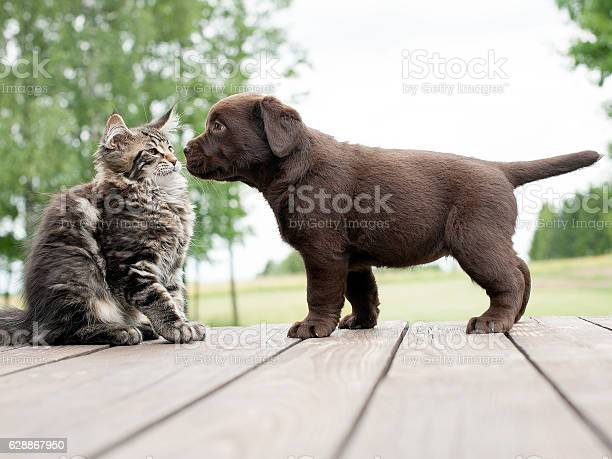 Cat and dog friendship picture id628867950?b=1&k=6&m=628867950&s=612x612&h=f3yo6meal6uhkumpbsakfgmuiz0slsapylrj1plxbda=