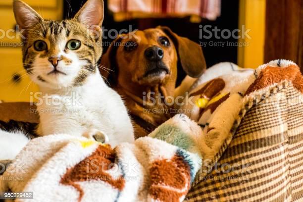 Cat and dog friendship picture id950229452?b=1&k=6&m=950229452&s=612x612&h=h8kxatm6ejmhibdeqttweckjwibyjfrp9nee3lrhrgk=