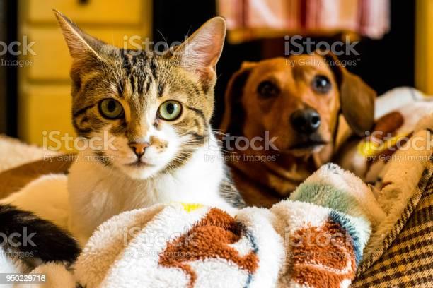 Cat and dog friendship picture id950229716?b=1&k=6&m=950229716&s=612x612&h=lqzbntrgcb6qpw5zjrtfco6s8kfjbgnwzfvrcstteka=