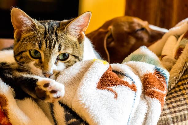 Fotos van mooie pussy