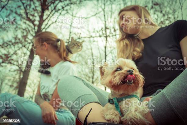 Cat and dog girls are walking with a yorkshire terrier and a cat picture id959552308?b=1&k=6&m=959552308&s=612x612&h=i0gcw8oideplo kwfmbk x67hyyoyq3znjs8rzinq9u=