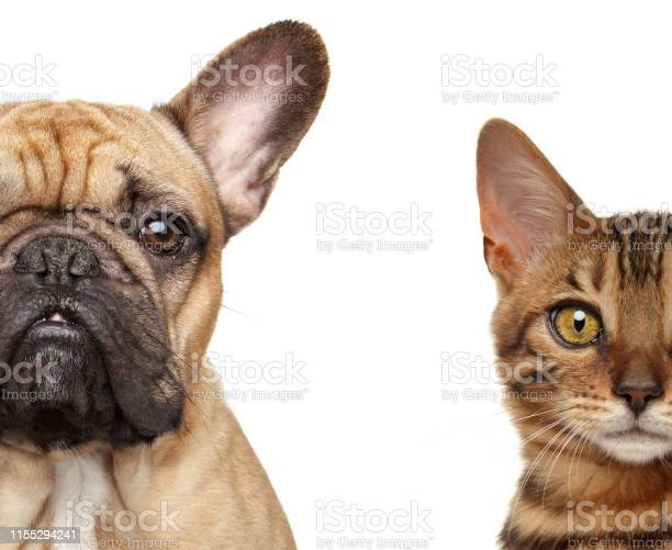 Cat and dog half face isolated picture id1155294241?b=1&k=6&m=1155294241&s=612x612&h=tswjbytj5z vpcooggtpdofhbp3ps5ixubvr3ngzwqk=