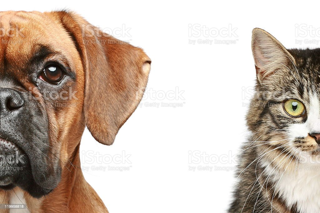 Dog and cat. half of muzzle close up portrait on a white background
