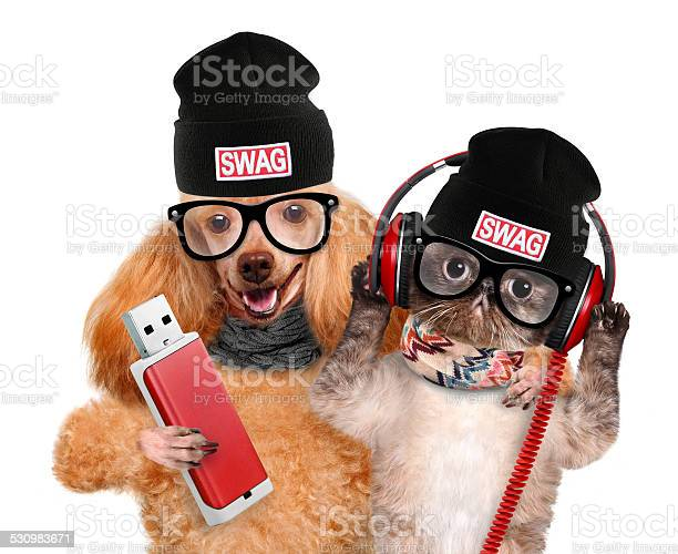 Cat and dog headphones picture id530983671?b=1&k=6&m=530983671&s=612x612&h=dergvcs1k0tfp3gbtbxb ctyhd wujyvzmdfdd ddyk=