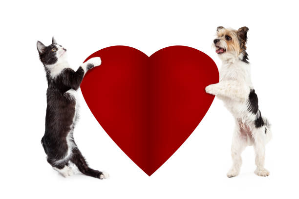 Cat and Dog Holding Blank Valentine Heart Cat and dog standing up holding blank red paper Valentines Day heart to write your message on cat valentine stock pictures, royalty-free photos & images