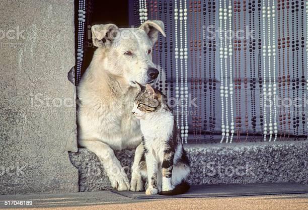 Cat and dog in harmony together picture id517046189?b=1&k=6&m=517046189&s=612x612&h=xfiy7c0hzh64pipfsulro26jnmquybb4gttajky1ena=