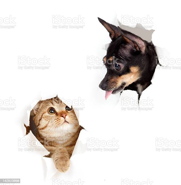 Cat and dog in paper side torn hole isolated picture id142523898?b=1&k=6&m=142523898&s=612x612&h=xrruw5jwlv5t5cwbuifr52nqmtjbbjt1kyja1haaaxw=