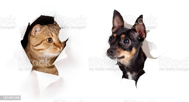 Cat and dog in paper side torn hole isolated picture id157491256?b=1&k=6&m=157491256&s=612x612&h=my8jfjlcagebrviprmxaecdiafxf1kobjo4hoxsvpb8=