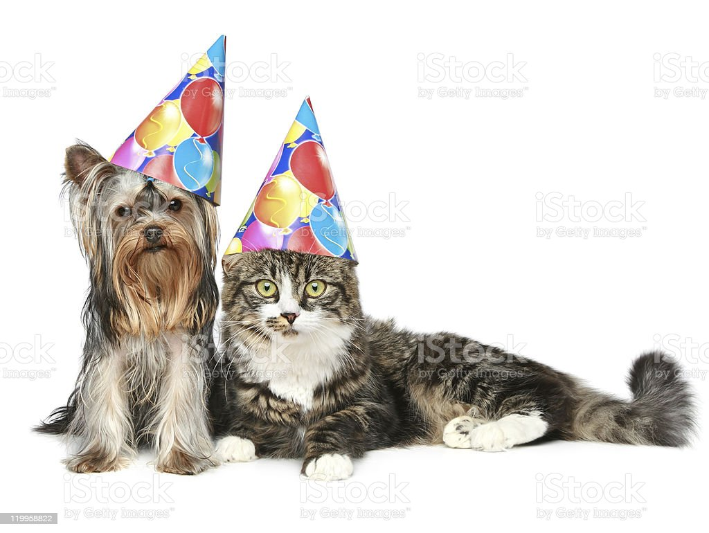 cat and dog in party hat on a white background stock photo
