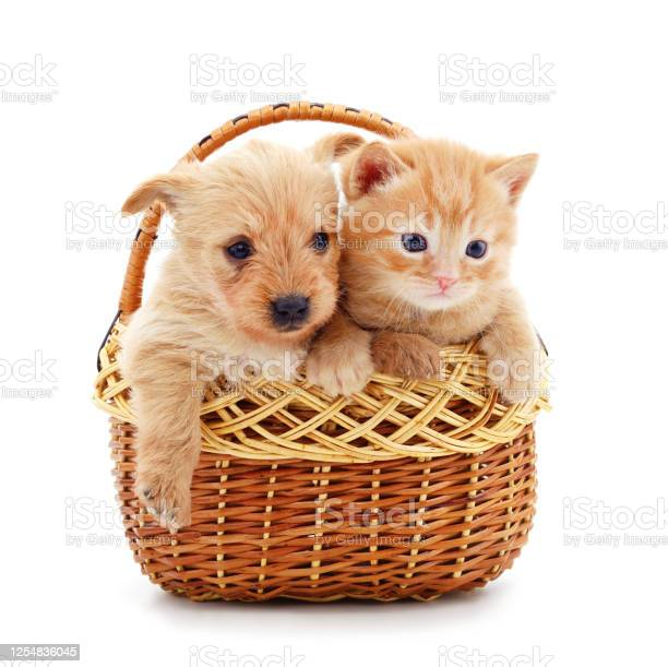 Cat and dog in the basket picture id1254836045?b=1&k=6&m=1254836045&s=612x612&h=qwswtsnn3qaqbqriqar5dyktpcptocj5ayounxrbjqa=
