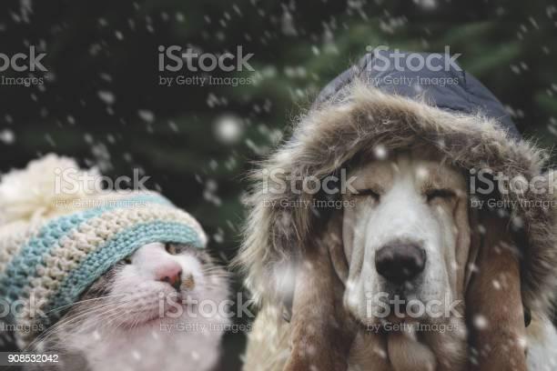 Cat and dog in winter cap picture id908532042?b=1&k=6&m=908532042&s=612x612&h=wb rvplvsfybjdy1ipoiz8bb9vmu qypfius7goaeoi=