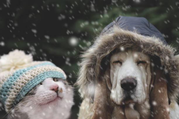 Cat and dog in winter cap picture id908532042?b=1&k=6&m=908532042&s=612x612&w=0&h=8047jt08s9uqhvnhb9tsfg1nbpcliuq6s3yg7cug1tq=