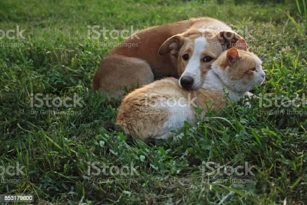 Cat and dog lie together picture id853179600?b=1&k=6&m=853179600&s=612x612&h= 9auedzp7pq8wnkiuoaca7bgunmegzexrnp8s2nwhsu=