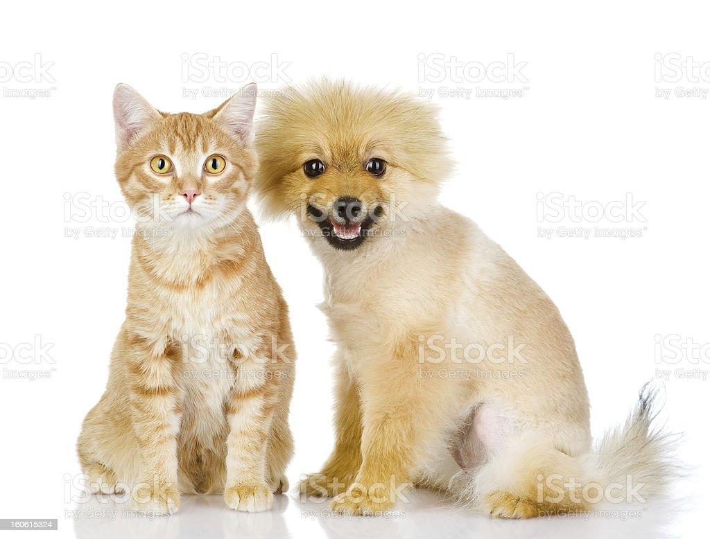cat and dog looking at camera royalty-free stock photo