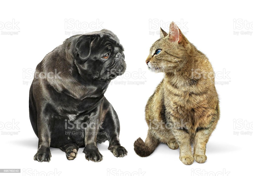 Cat and dog looking at each other stock photo