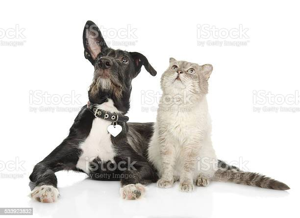 Cat and dog looking up isolated on white background picture id533923832?b=1&k=6&m=533923832&s=612x612&h=tzuxmrc3m1ce  kgwjqyxpf5aeb0hhm2khbcnhfzgs8=