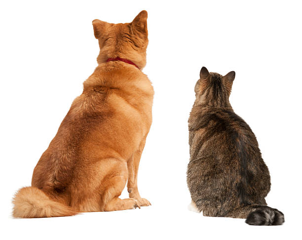 Cat and dog looking up stock photo