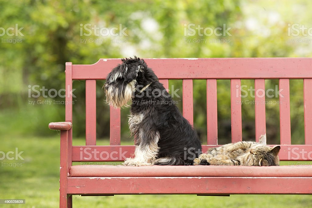 Cat and dog love stock photo