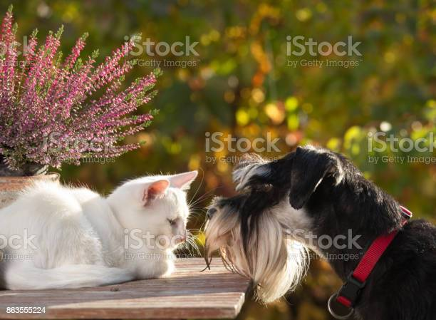 Cat and dog love picture id863555224?b=1&k=6&m=863555224&s=612x612&h=yyxol0uwybbevh4 l23liwogi2ua9duriaiiymqeeoq=