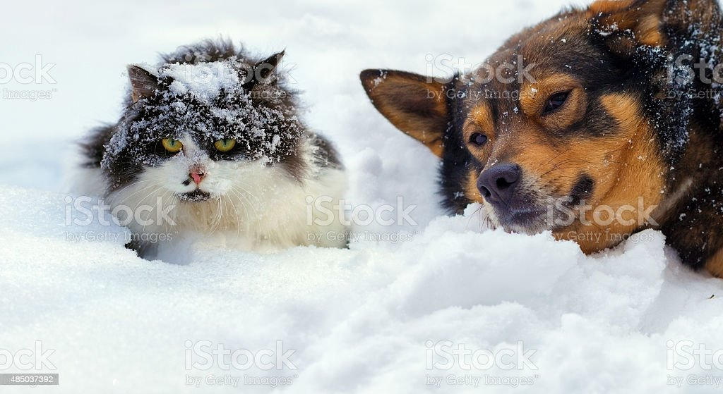 Cat and dog lying on the snow in cold winter stock photo