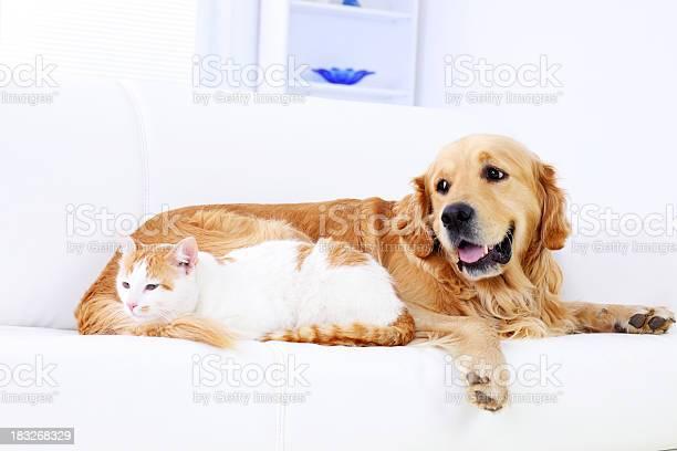 Cat and dog lying together on the sofa picture id183268329?b=1&k=6&m=183268329&s=612x612&h=nxrwsmxbzum5powb0jddsu3ll lfehkvd5 4g9iamn0=