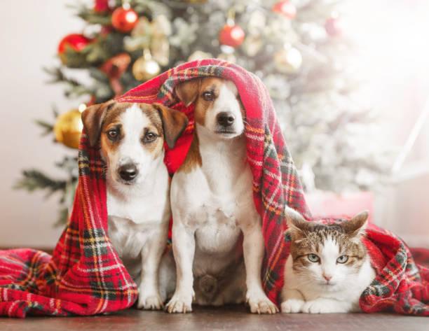 Katze und Hund in der Nähe von Weihnachtsbaum – Foto