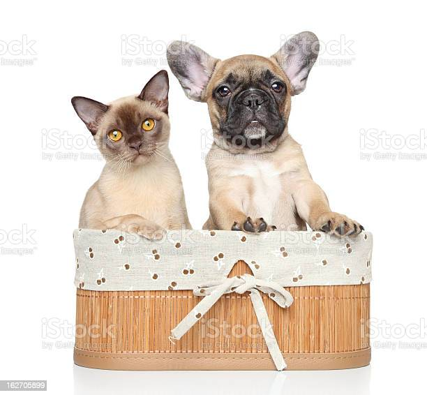 Cat and dog on a white background picture id162705899?b=1&k=6&m=162705899&s=612x612&h=ffsgdyj5pufrsa4frnk3oaad 2g11 wwdvoadlmxkgq=