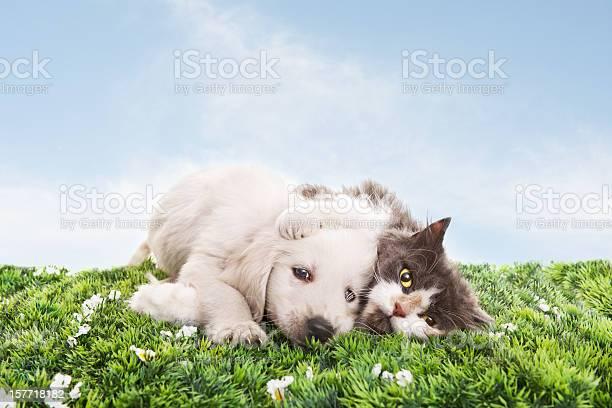 Cat and dog on grass picture id157718182?b=1&k=6&m=157718182&s=612x612&h=ufeqyphkqgwbzfinraoicq71psvpcbgil36lq5vh6li=