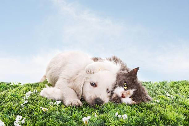 Cat and dog on grass picture id157718182?b=1&k=6&m=157718182&s=612x612&w=0&h=w0ric8eyqbna2cxdw6maauk0e1coag5wg2pmt4fj1fg=