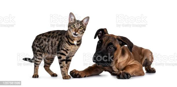 Cat and dog on white background picture id1257581599?b=1&k=6&m=1257581599&s=612x612&h=eybezhbcpba91axincjlbbmrv7mkn6ofoc1hui77jbg=