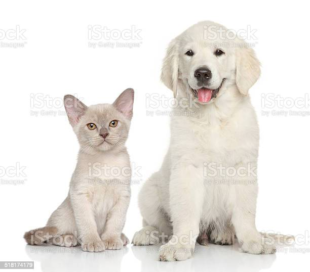 Cat and dog on white background picture id518174179?b=1&k=6&m=518174179&s=612x612&h=ee6enbgt2ea0v88hecbqrqx5nmgqhm4zgmjazltttlc=