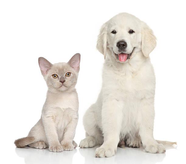 Cat and dog on white background picture id518174179?b=1&k=6&m=518174179&s=612x612&w=0&h= tadq gecrwkbhononz6qdqvvy8 apoqrwbsqfdgjuo=