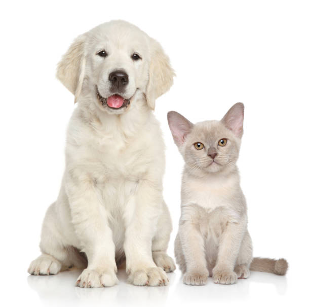 Cat and dog on white background picture id964387708?b=1&k=6&m=964387708&s=612x612&w=0&h=r6sgyvjm65mlxjajwbssmtkldflh 2fpozxcirzmqr0=