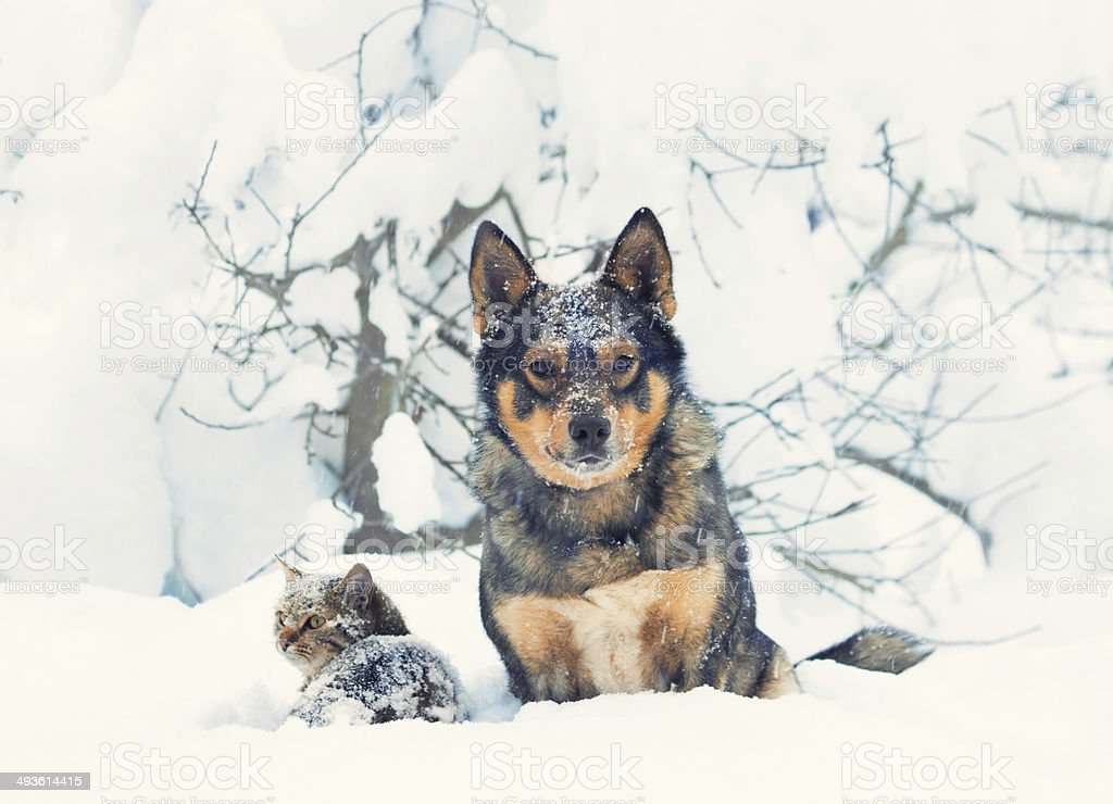 Cat and dog outdoor in the snowstorm stock photo