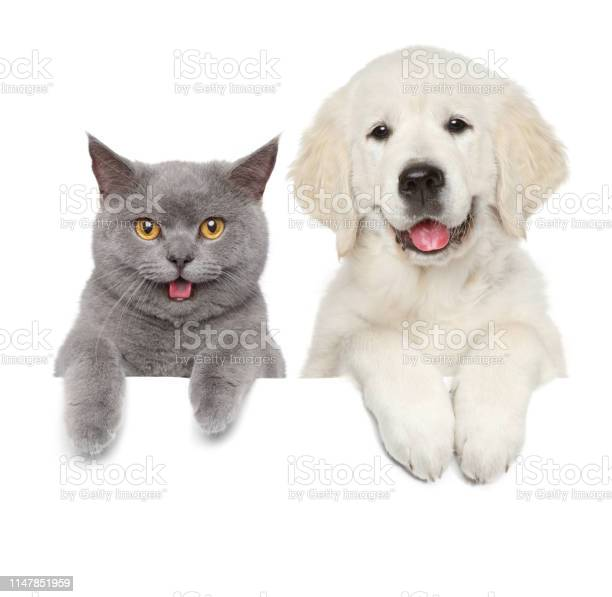 Cat and dog over white banner picture id1147851959?b=1&k=6&m=1147851959&s=612x612&h=qc4qf2idih805a0r9skbkafy1bkumywzb35rpu83r7a=