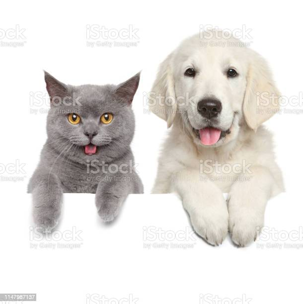 Cat and dog over white banner picture id1147987137?b=1&k=6&m=1147987137&s=612x612&h=ppfdecdcxmgv0k791ltfydstkpofmqaihdm846cqemm=