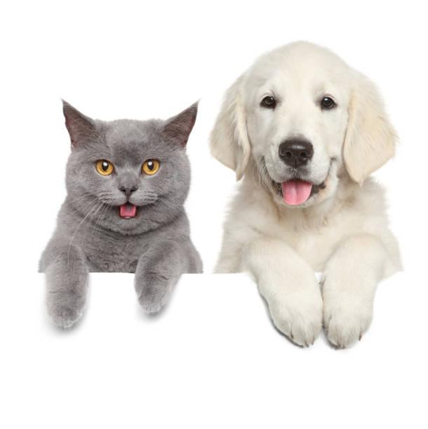 Cat and dog over white banner picture id1147987137?b=1&k=6&m=1147987137&s=612x612&w=0&h=a p8zgcyyfxeygwttsoz4peeufg evnytbwtm1btspq=