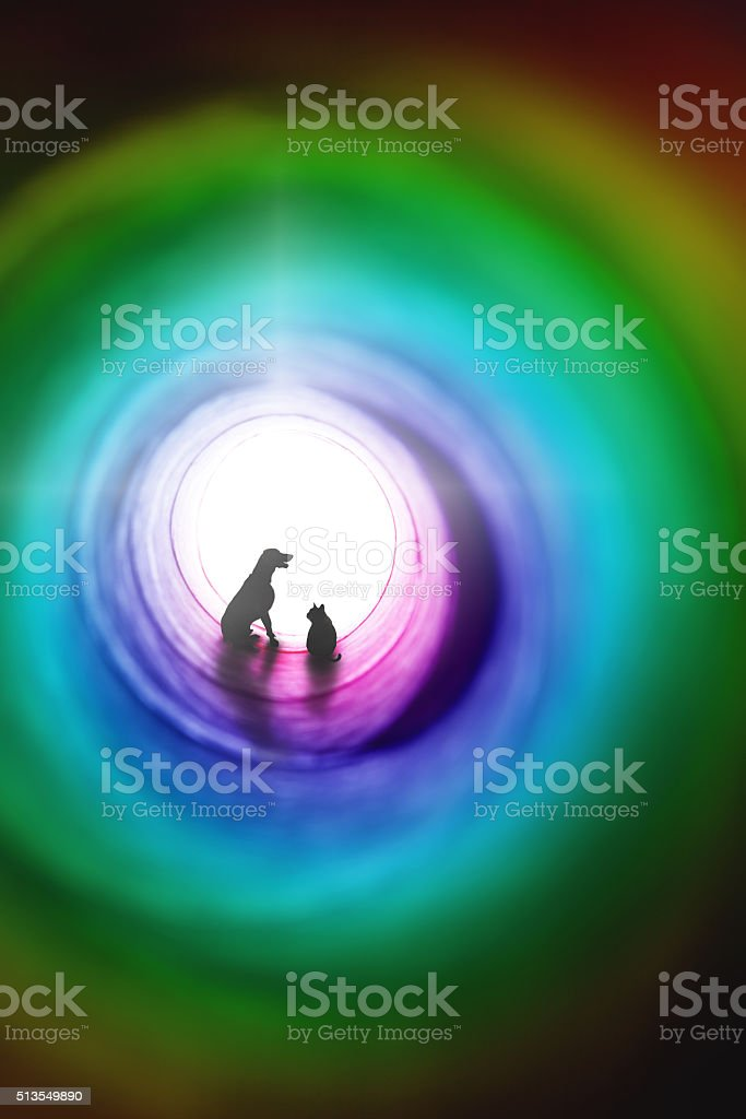 Cat And Dog Pet Loss Concept stock photo