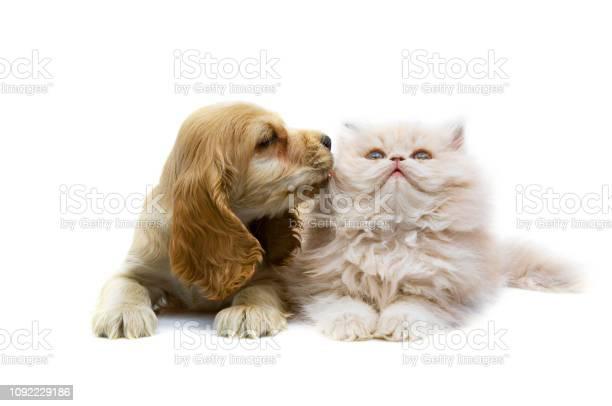 Cat and dog picture id1092229186?b=1&k=6&m=1092229186&s=612x612&h=ub lfv8xhlawhvldagcgq3 bnuiyrhynbseah6xuec0=
