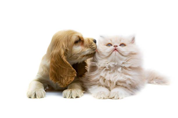 Cat and dog picture id1092229186?b=1&k=6&m=1092229186&s=612x612&w=0&h=d2jkf8enc 38y1ivs7tpvcxg2glvl3drgtffhispx3k=