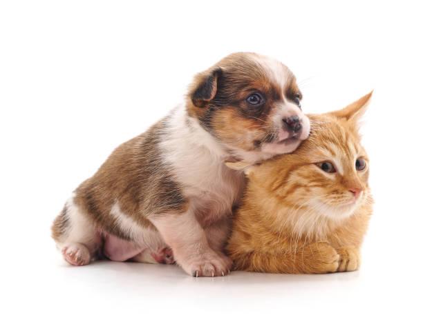 Cat and dog picture id1141708511?b=1&k=6&m=1141708511&s=612x612&w=0&h=k9xptqyqyjrcgjy1 napbsr4lmnawjxrnvm7qrvohak=