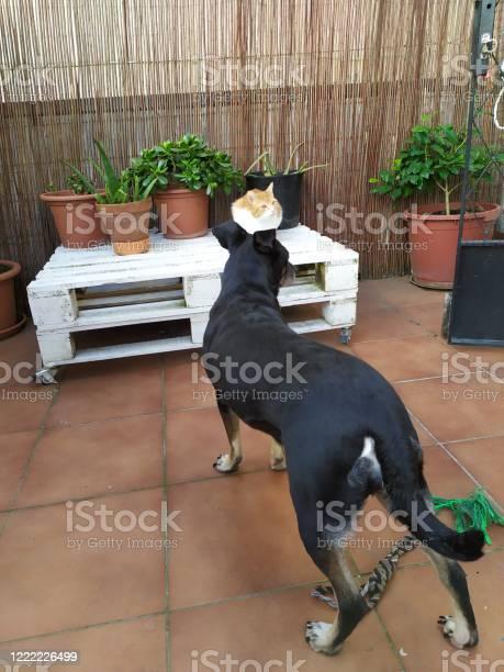 Cat and dog picture id1222226499?b=1&k=6&m=1222226499&s=612x612&h=utt1ky7ffhx0fshoowynpnwjitp2ojqdlxycoorh7lc=